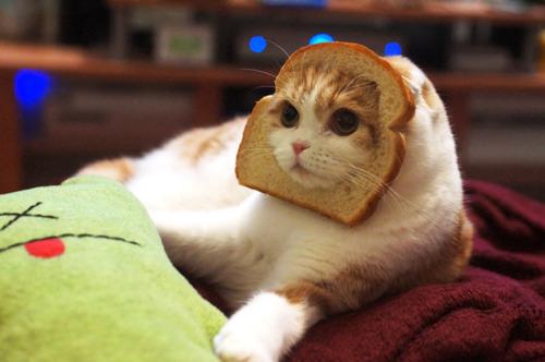 tumblr-cat-pics.jpg